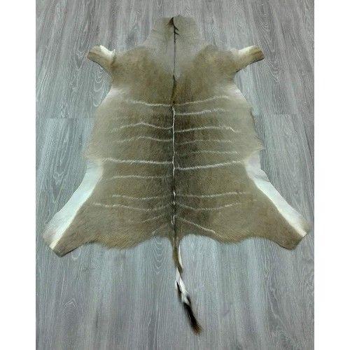 Alfombra piel de Kudu...