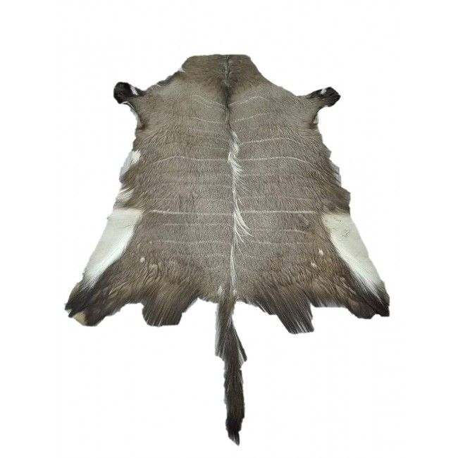 Nyala Area Rug, 51x47 in, Exotic Area Rug, Area Rugs Living Room